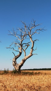 tree-384197_640